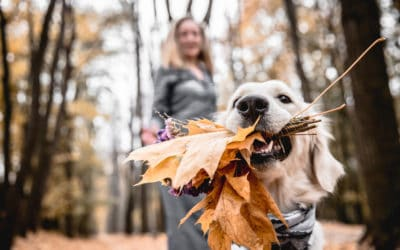 Two Paws up for the Best Pet-Friendly Things to Do in Winter Park, CO